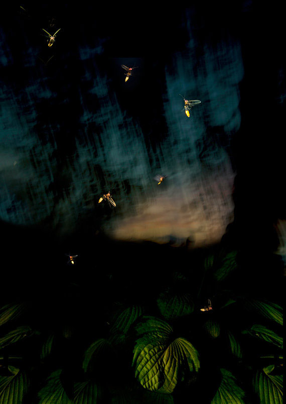 fireflies-small-mysteries